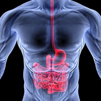 Why an unhealthy digestive system can affect fat loss or muscle gain