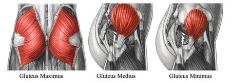 Why stronger, more aesthetic glutes ain't just for the ...